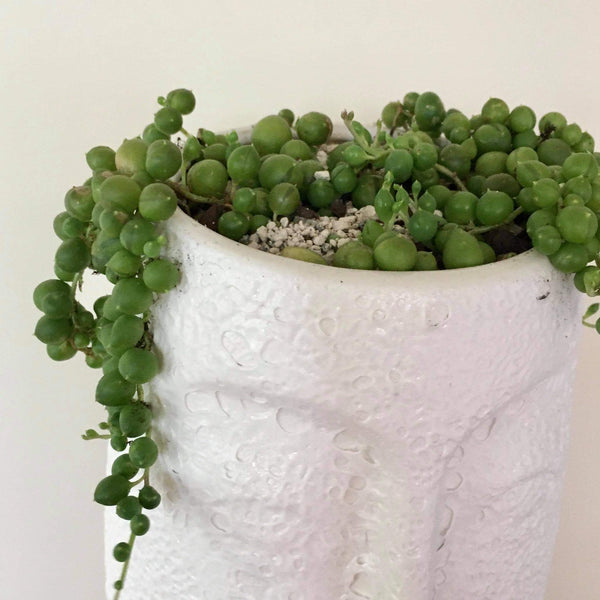 Planter with Live String of Pearls | White Face - Large | Ceramic