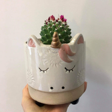 Planter with Live Flowering Cactus | Unicorn | Ceramic