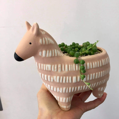 Planter with Live Succulent | Zebra | Ceramic