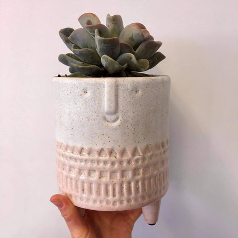 Planter with Live Succulent | San Fran - Pink #2 | Ceramic