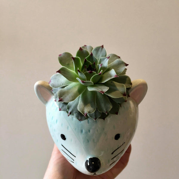 Planter with Live Succulent | Mouse | Ceramic