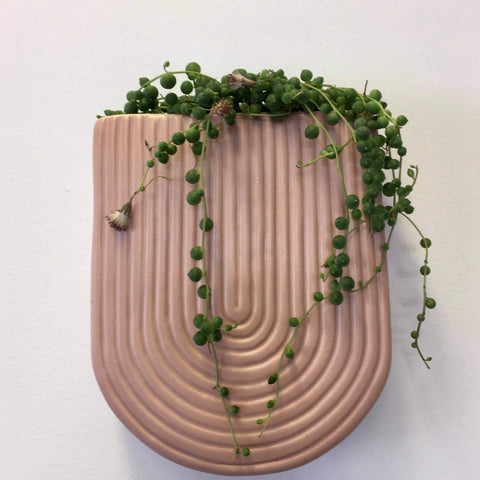 Wall Planter with Live Succulent | Pink | Ceramic
