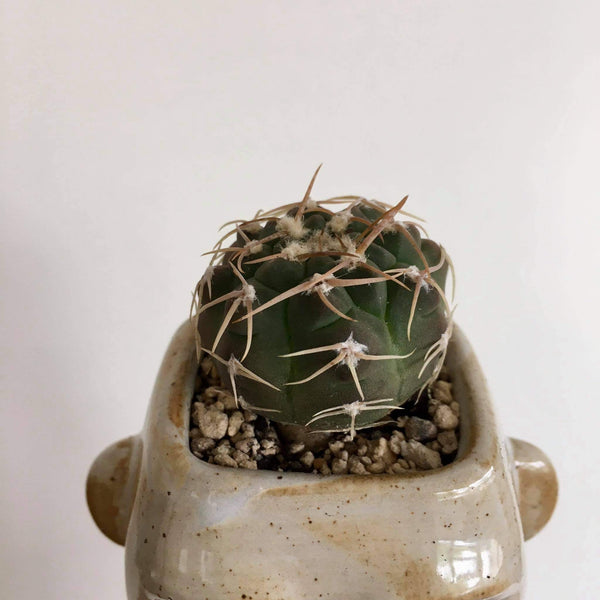 Sahara Man Planter with Live Cactus #2 | Ceramic