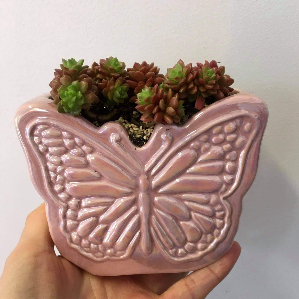 Planter with Live Succulent | Butterfly #3 | Ceramic