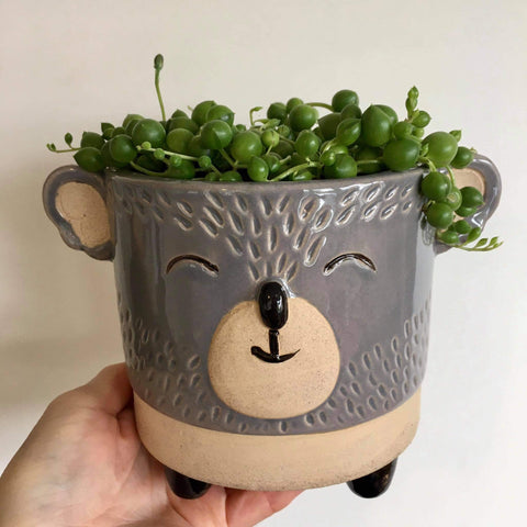 Planter with Live String of Pearls | Koala - Large #1 | Ceramic