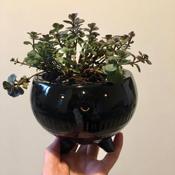 Planter with Live Succulent | Clipso - Large #2 | Ceramic