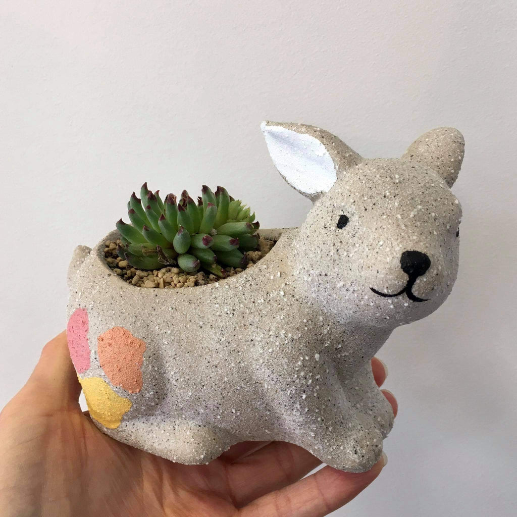 Planter with Live Succulent | Bunny #1 | Ceramic