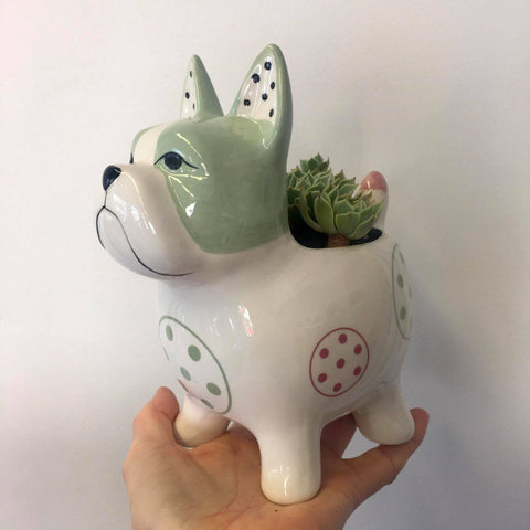 Planter with Live Succulent | Max Dog - Large | Ceramic
