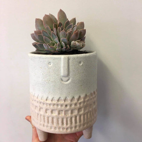 Planter with Live Succulent | San Fran - Pink #1 | Ceramic