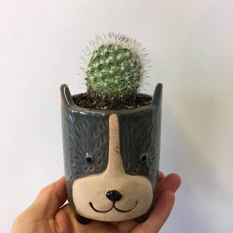 Planter with Live Cactus | Dog - Small | Ceramic
