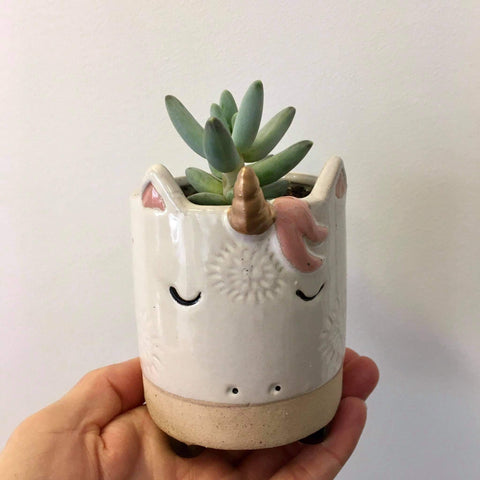Planter with Live Succulent | Unicorn - small #2 | Ceramic