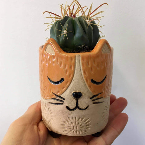 Planter with Live Cactus | Cat - small | Ceramic