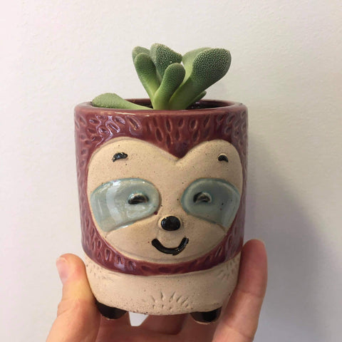 Planter with Live Succulent | Sloth - Small #1 | Ceramic