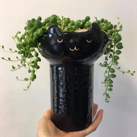 Planter with Live String of Pearls | Felicity Feline | Ceramic