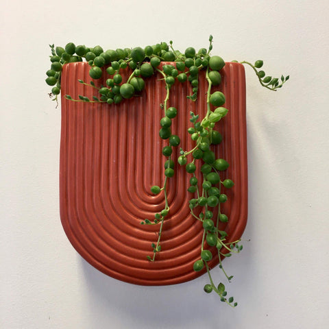 Wall Planter with Live Succulent | Terracotta | Ceramic