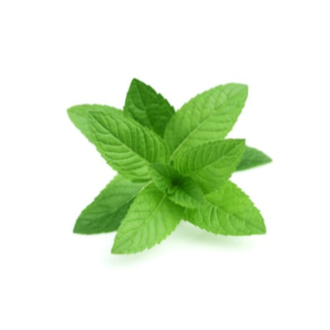 Image of dōTERRA Peppermint Essential Oil - 15mL