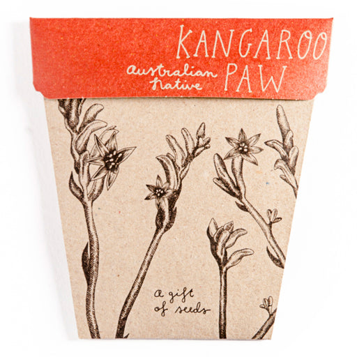 Sow 'n Sow Kangaroo Paw Flowers Gift of Seeds