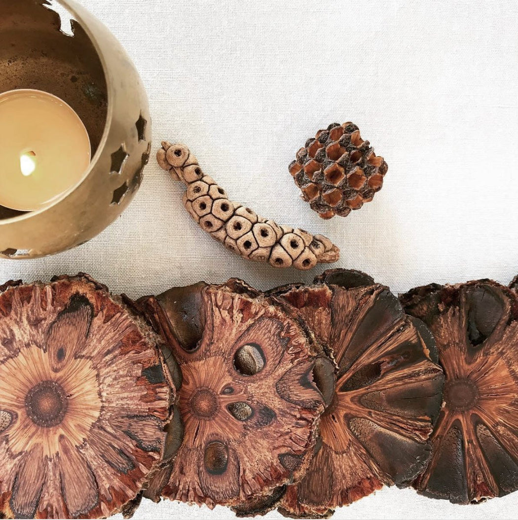 Banksia Pod Coasters - Set of Four