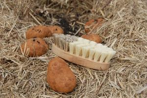 Timber Oval Vegetable Brush