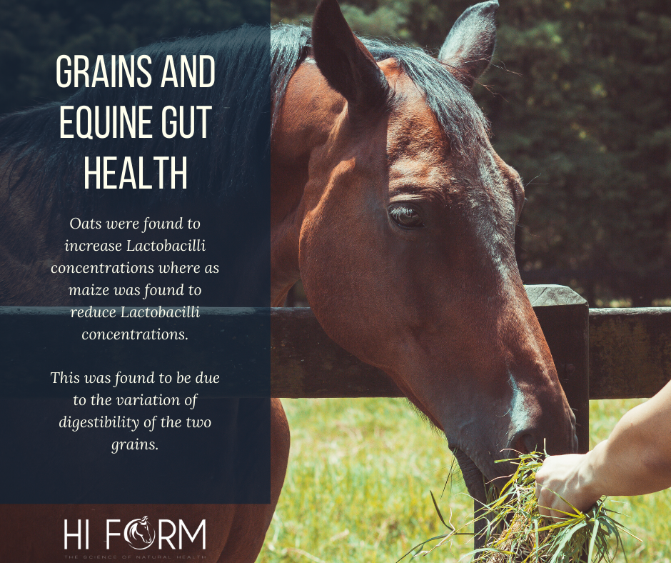 The Truth About Equine Gut Health