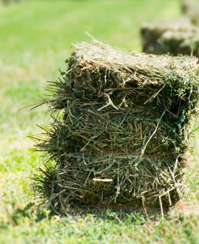 THE LONG AND THE SHORT (STEM) OF IT -HOW MUCH HAY SHOULD YOU REALLY FEED YOUR HORSE