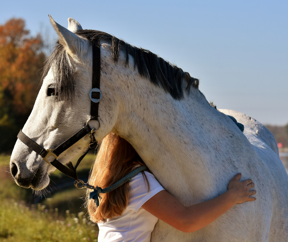 Immune support for the Equestrian