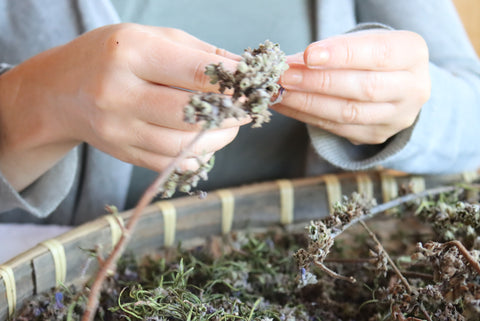 hands processing wildcrafted herbs for botanical vegan skincare from Plum Brilliance Apothecary