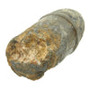 show larger image of product view 4 : Original Civil War Confederate 3-inch Ordnance Rifle Read Shell Original Items