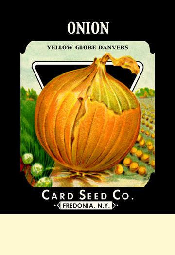 Onion - Yellow Globe Danvers 12x18 Giclee on canvas