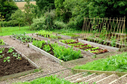 Top tips to start growing your own allotment