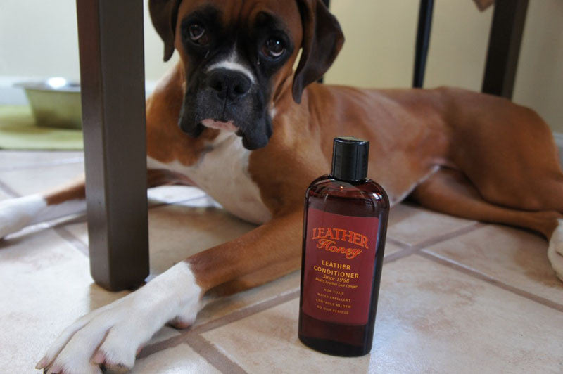 Preventing and Cleaning Pet Stains on Leather