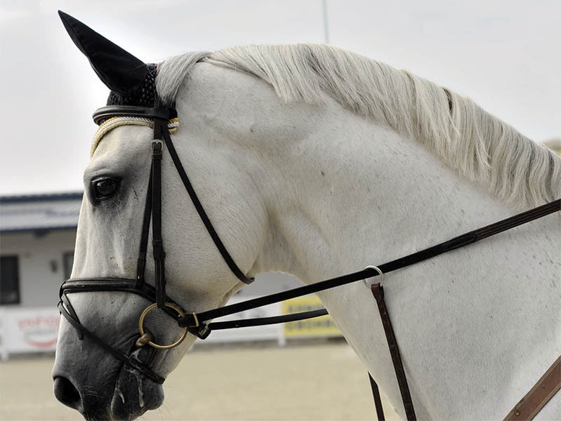 How Do You Soften a New Leather Bridle?