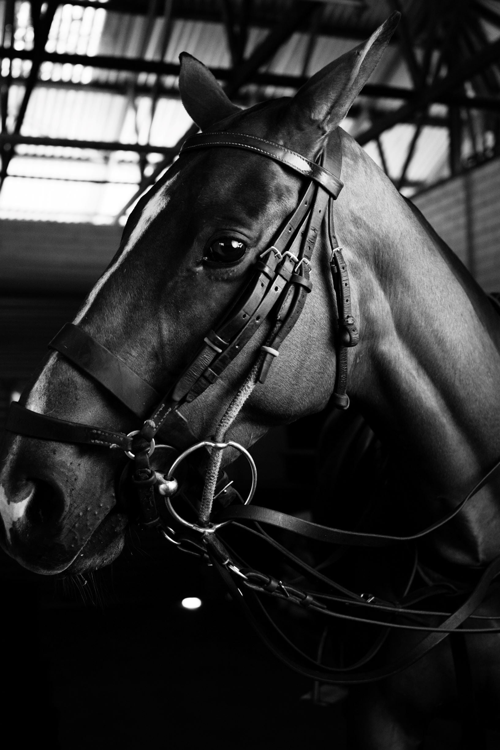 Leather Bridle Cleaner