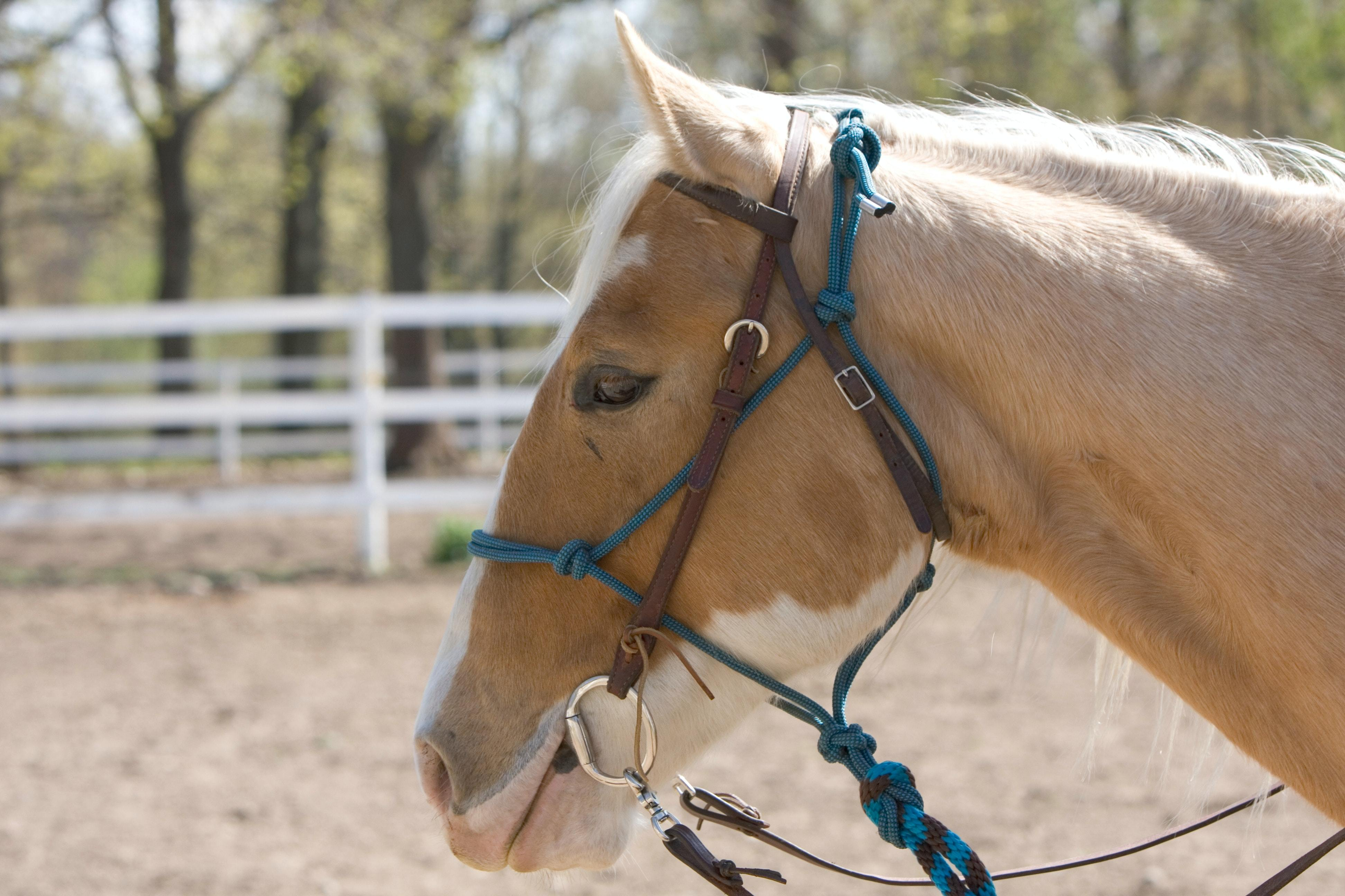 Leather Bridle Conditioning