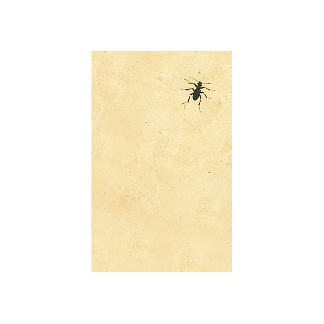 Dark Bug - Postkarte