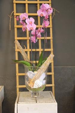 orchidee in glas