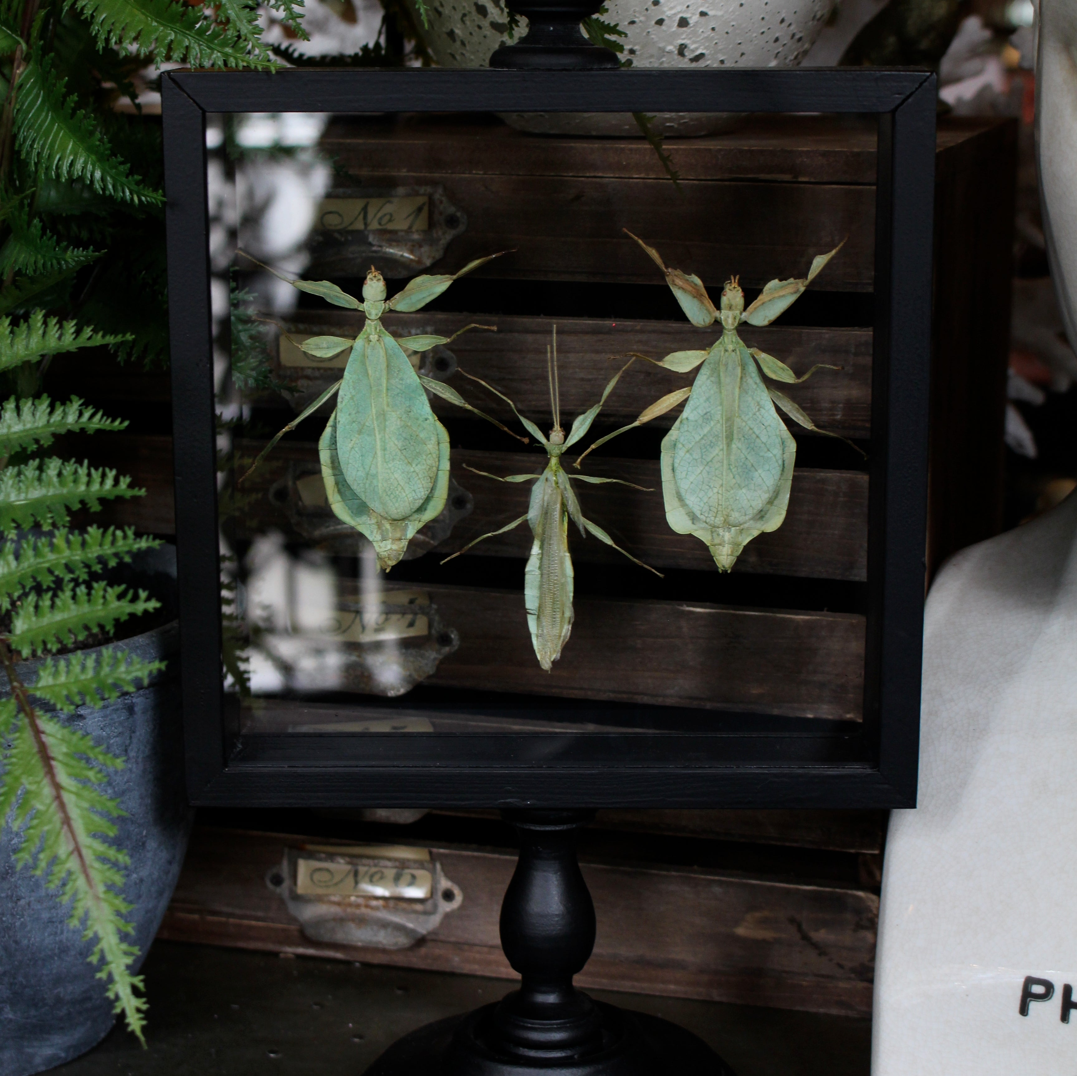 Glass Collector's Frame - Insects