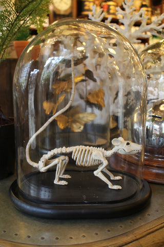 Articulated Rat Skeleton
