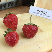 Load image into Gallery viewer, Cabot Strawberry Plants