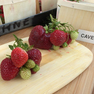 Cavendish Strawberry Plants
