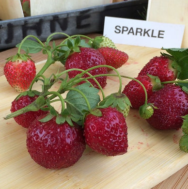 Sparkle Strawberry Plants