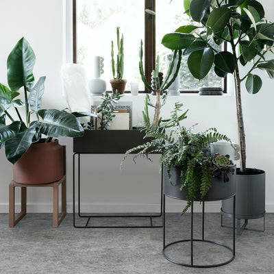 indoor plant guide | improve your home & wellbeing