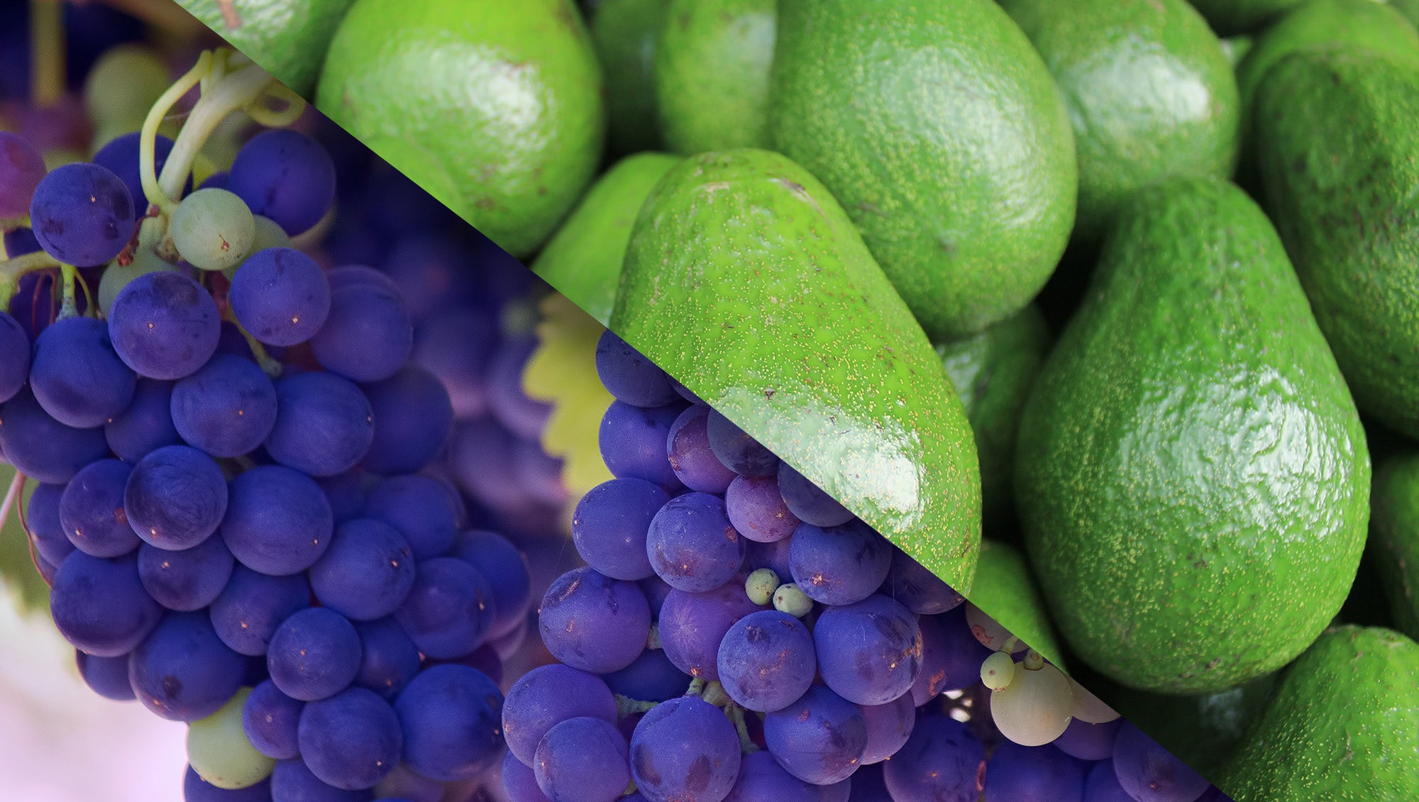 The Effects of Avocados and Red Wine on Inflammation