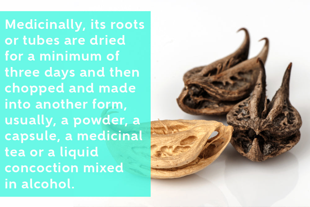 Proven Medicinal Benefits Of Devil's Claw