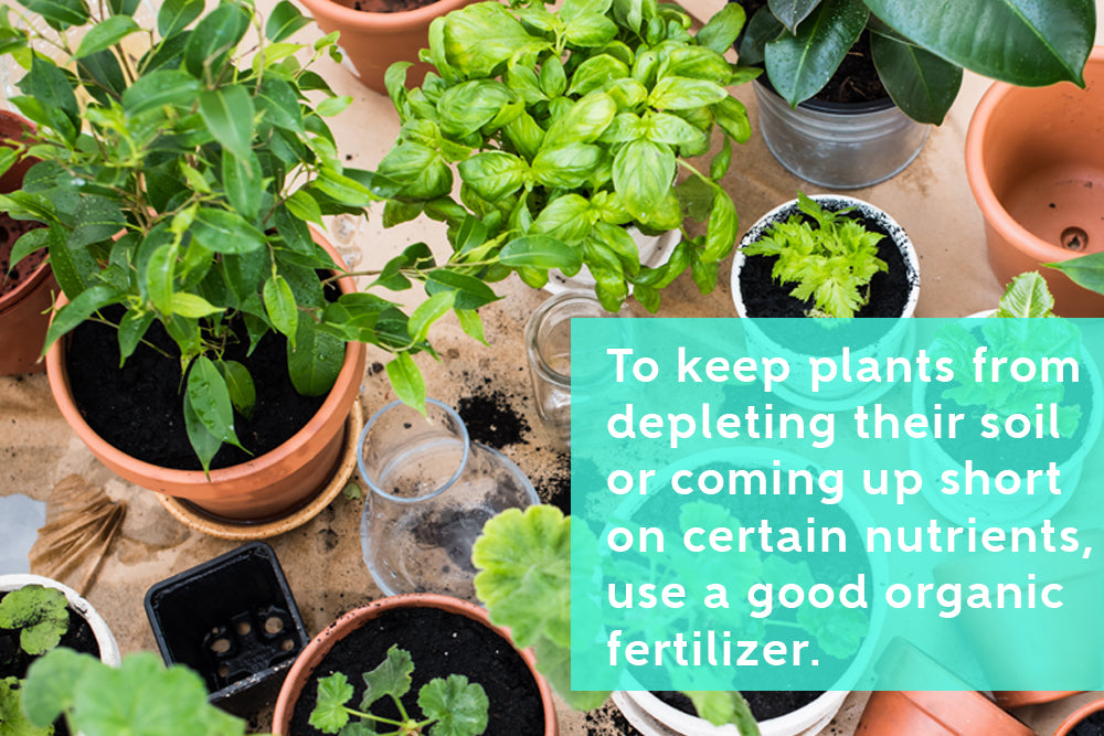 Benefits of Using a Good Organic Fertilizer for Growing Herbs