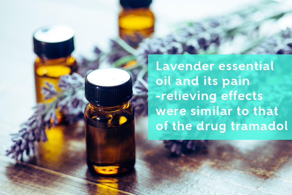 The Effectiveness of Lavender Essential Oil in Reducing Pain
