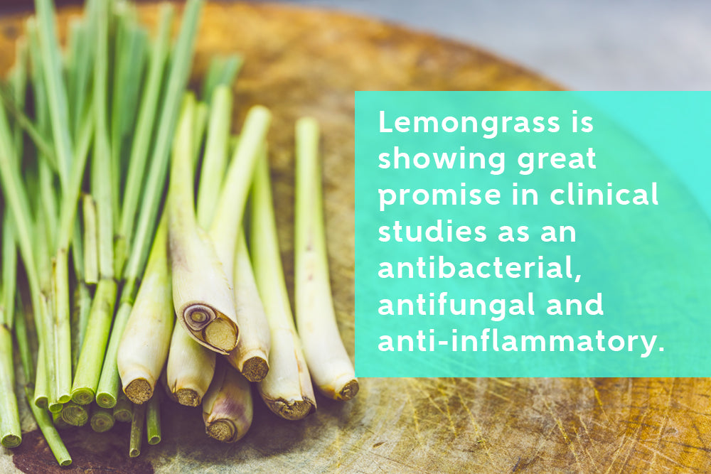 How to Grow Lemongrass A Antibacterial, Antifungal and Anti-Inflammatory Herb