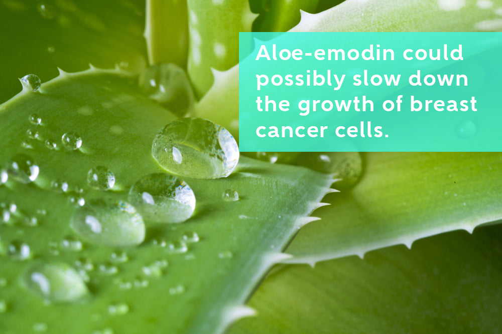 Aloe Vera Inhibits Proliferation of Breast and Cervical Cancer Cells