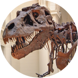 t-rex suffered from gout