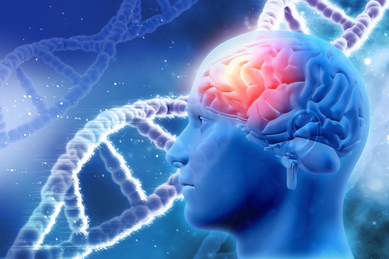 DNA and brain